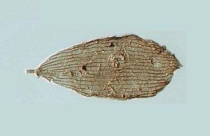 Ανακαλύφθηκαν απολιθώματα πεταλούδων πριν από 200 εκατομμύρια χρόνια