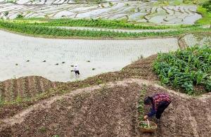 Η πιο πλήρης έως σήμερα «απογραφή» της Γης αποκαλύπτει κυριαρχία των… φυτών!