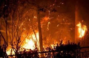 Υπό μερικό έλεγχο η φωτιά στα Φάρσαλα — Εκαψε 300 στρέμματα δάσους