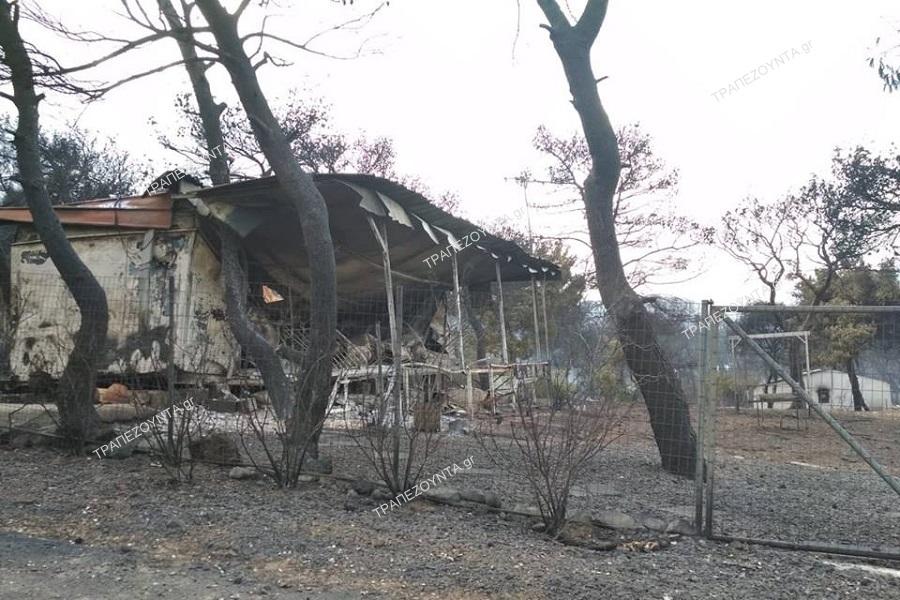 Τουρκία: 100 δέντρα στη μνήμη των θυμάτων της πυρκαγιάς στο Μάτι της Αττικής