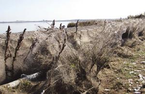 Τεράστιο «πέπλο» από ιστούς αράχνης «κατάπιε» 1000 μέτρα βλάστησης στη Βιστωνίδα (φωτο, βίντεο)