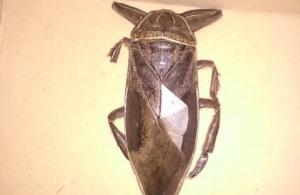 Εντοπίστηκε σαρκοφάγο έντομο… γίγας στη Λαμία