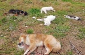 Μήνας «κτηνωδίας» ο Δεκέμβριος σε Τραπεζούντα και Αργυρούπολη — Ασυνείδητοι θανάτωσαν ζώα — ΠΡΟΣΟΧΗ: Σκληρή εικόνα