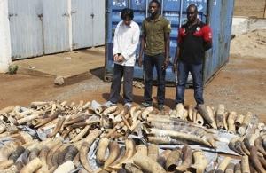Σιγκαπούρη: Κατάσχεση ρεκόρ στη χώρα με 8,8 τόνους ελεφαντόδοντου