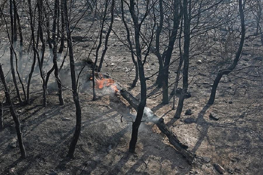 Φωτιά στη Νέα Μάκρη: Ψάχνουν τον άντρα που έβαλε την φωτιά τα ξημερώματα της Πέμπτης