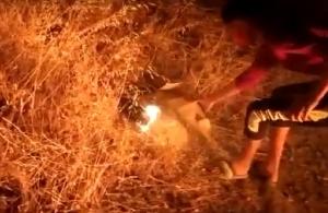 Λέσβος, βίντεο-ντοκουμέντο: Έτσι έβαλαν οι Αφγανοί τις φωτιές που κατέκαψαν τη Μόρια